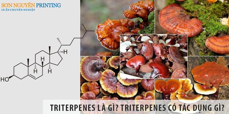 Triterpenes là gì? Triterpenes có tác dụng gì? Có ở đâu?